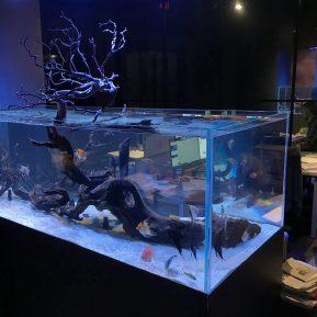 Midtown Showroom Freshwater Aquarium