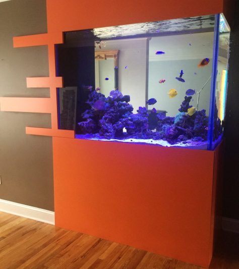Saltwater Aquarium Clifton NJ