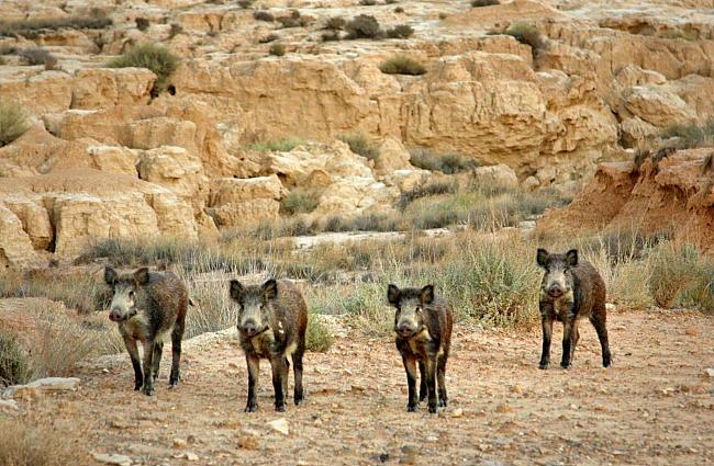 Hiszpania dziki