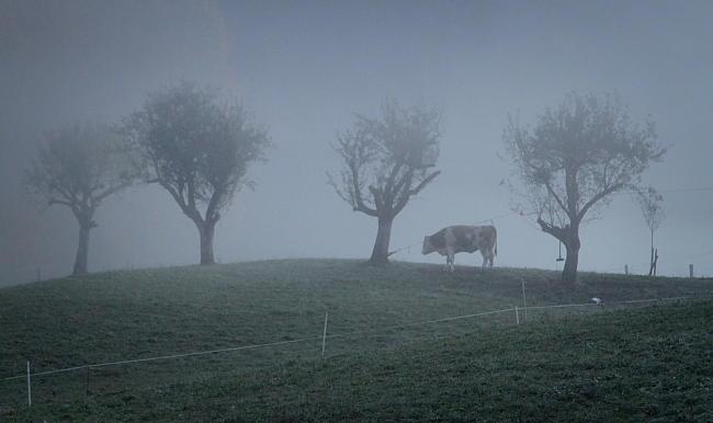 krowa-w-berchtesgaden