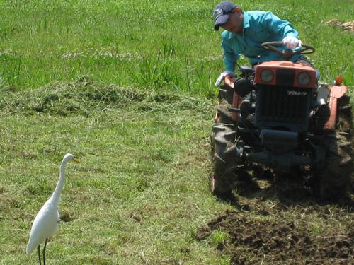 沖縄週末農業 沖縄農業ブログ