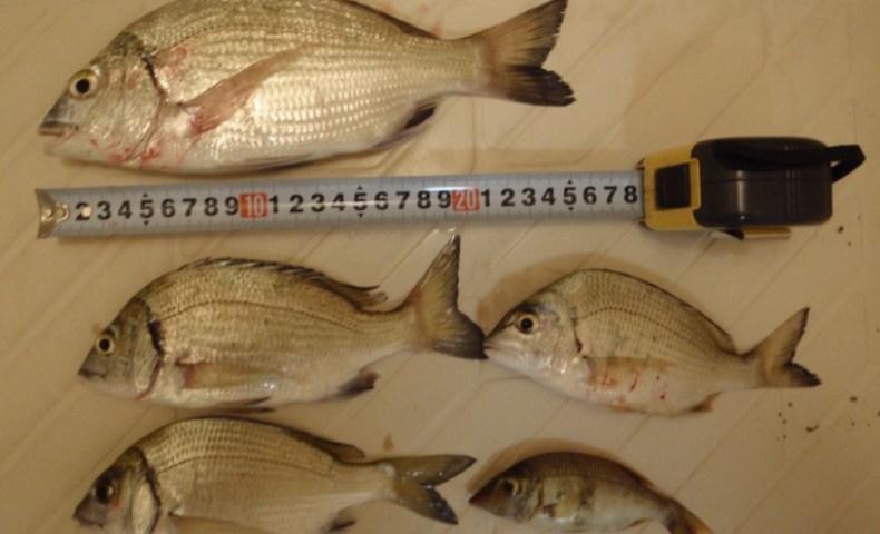 泡瀬 サムズ 裏 釣れる魚