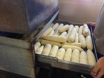 720x540 Corn into the steamer, in Canning corn and peaches at Lowndes High School, by Gretchen Quarterman, for OkraParadiseFarms.com, 12 July 2014