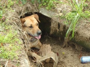 Look, I'm in the culvert