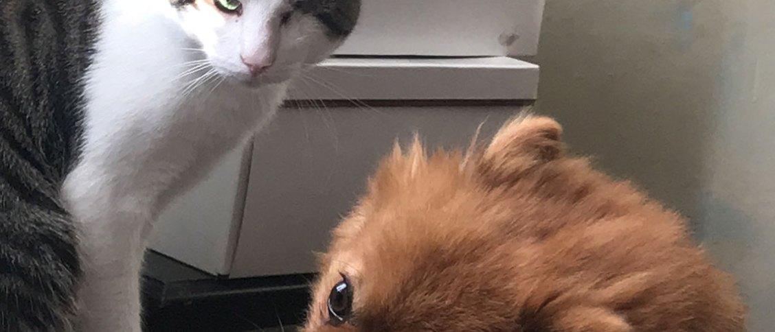 Evde Kedi ve Köpek Beslemek
