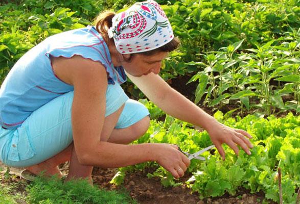 Junijska opravila na vrtu