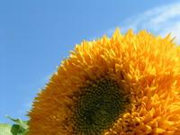 greda polna sonca - mladi vrtnarji