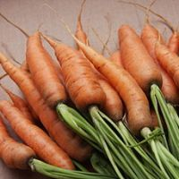 Kako si vzgojite okusno korenje