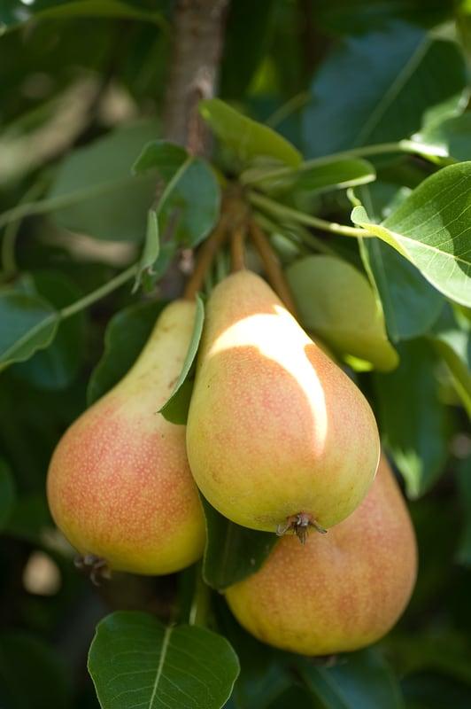 Prehranske vlaknine iz domačega vrta