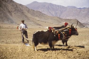 Paysan tibétain