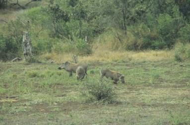 RSA 034 Kruger parc