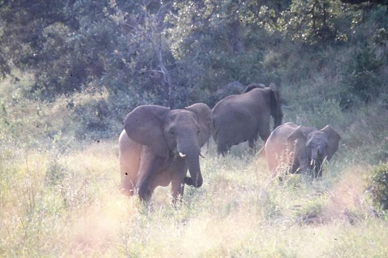 RSA 048 Kruger parc