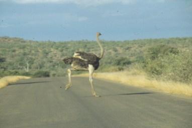 RSA 052 Kruger parc