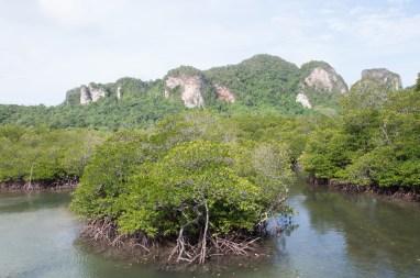 Mangrove sur Phi Phi