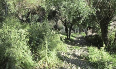 Chemin vers le monastère de Keylong