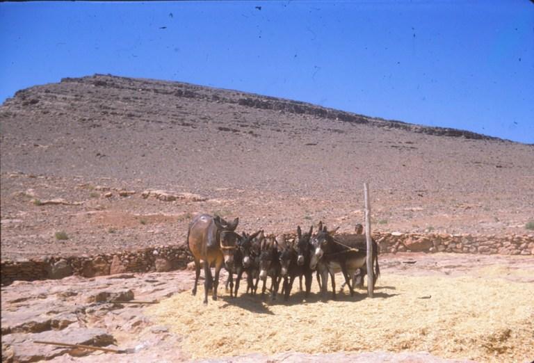 maroc 16