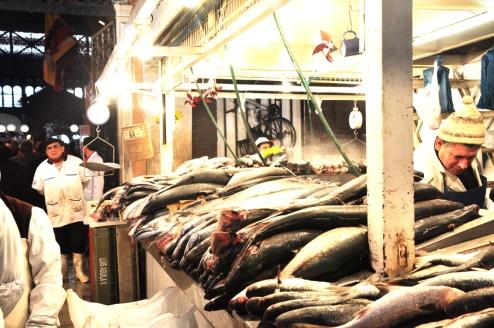 Beaux poissons du Pacifique