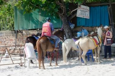 Les chevaux sur la plage