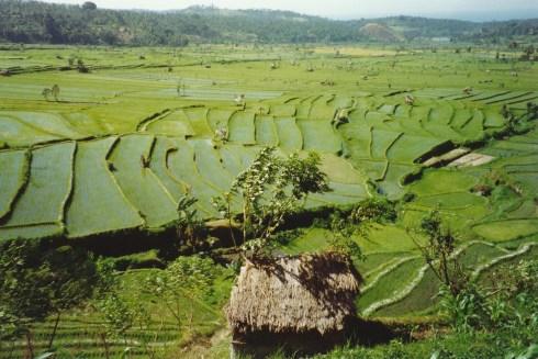 180 Bali 12