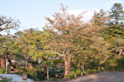 Kyoto: Gion parc