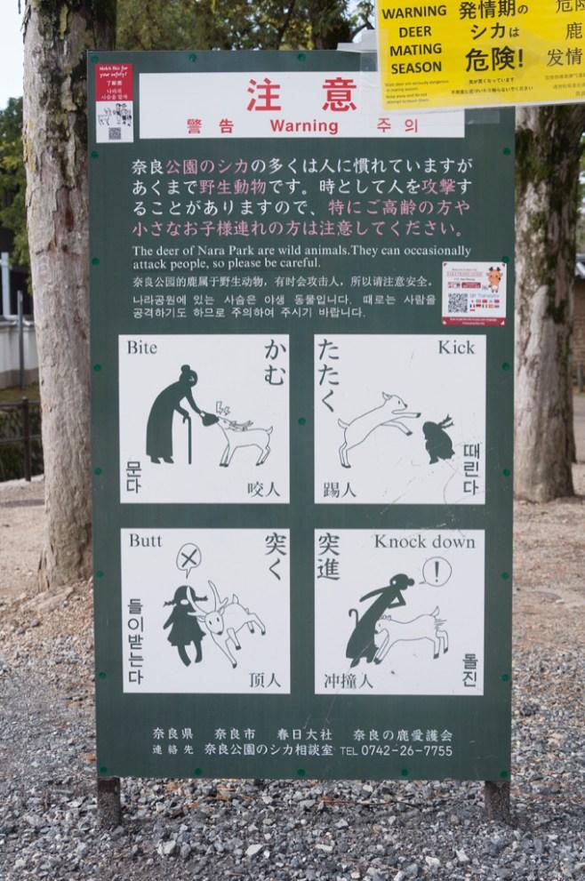attention aux cerfs