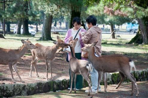 Kyoto: Nara