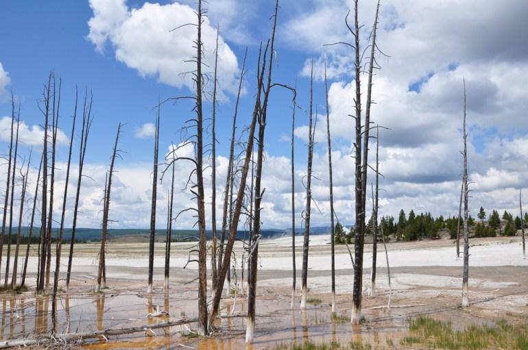 USA 637 Yellowstone