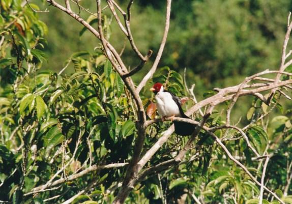 224 Pantanal