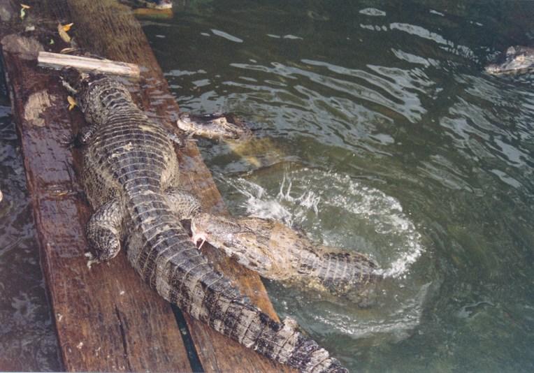 229 Pantanal