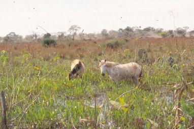 260 br pantanal