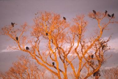 274 br pantanal