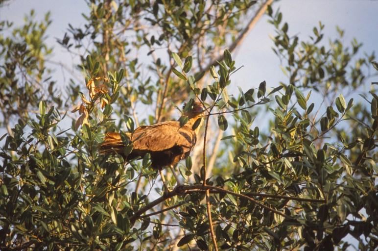 281 br pantanal
