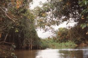 297 br pantanal