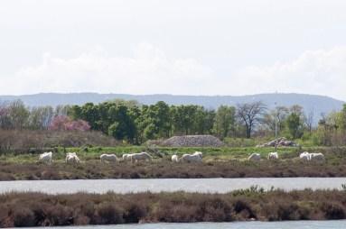Lac Méjean 4