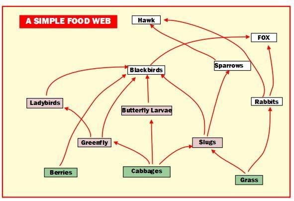 A simple food web