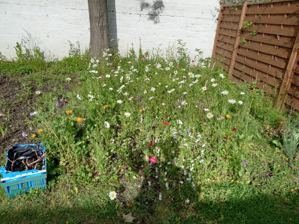 Sr Julie Doran's Wildflower Garden