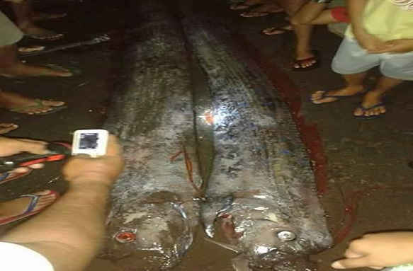 the big one earthquake rare sea creatures