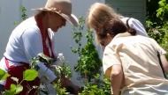 Making Your Garden Work For You:  ORGC Member Renee Marsh advises Perennial & Garden Plant Sale patrons