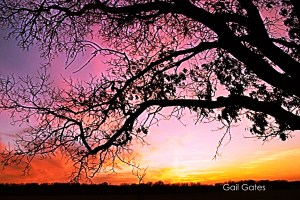 Sunset Tree Silhouette by Gail Gates