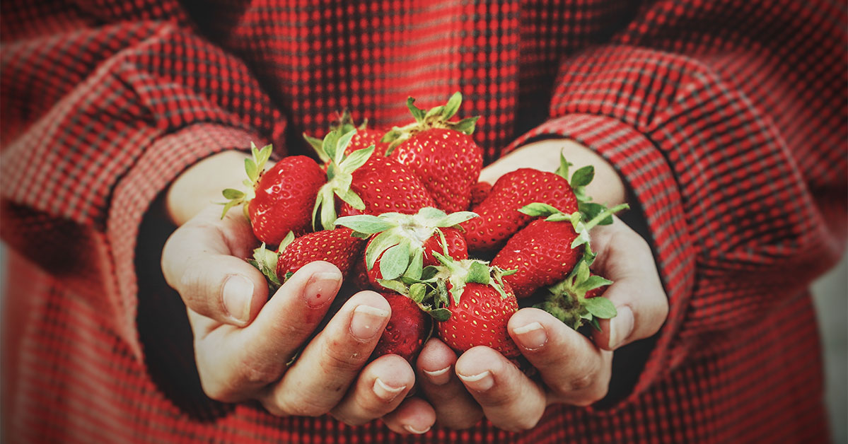 Strawberries in Hand   Old Metairie Garden Club