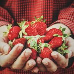 Strawberries in Hand | Old Metairie Garden Club