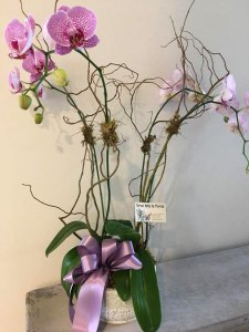 Door Prize Orchid | Old Metairie Garden Club