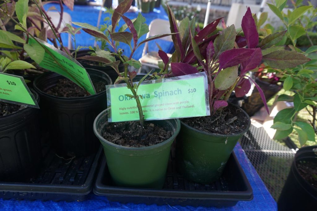 Farmers Arts Metairie Market April 16, 2019 photo 86 | Old Metairie Garden Club