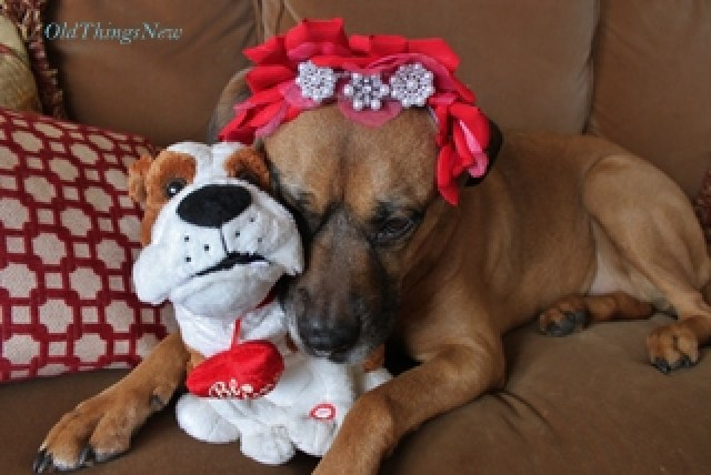 03-Valentine's Sasha 014