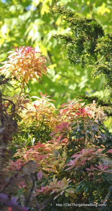 12-Spring Greens 065