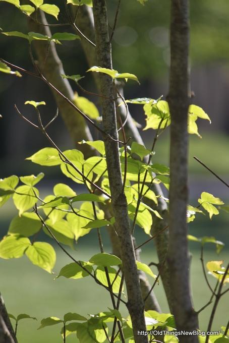 13-Spring Greens 082