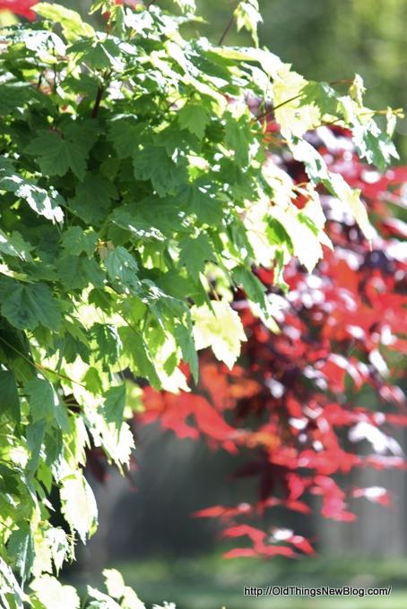 14-Spring Greens 085