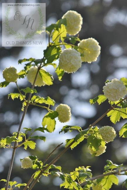Spring Greens 023