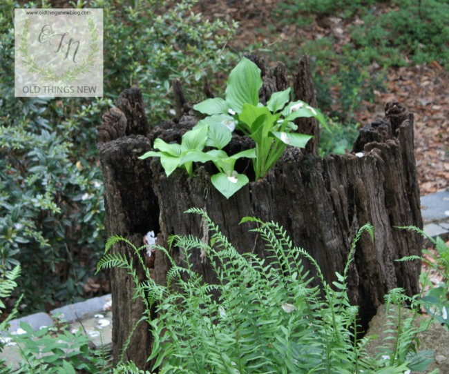 Greenville Gardens Tour 371