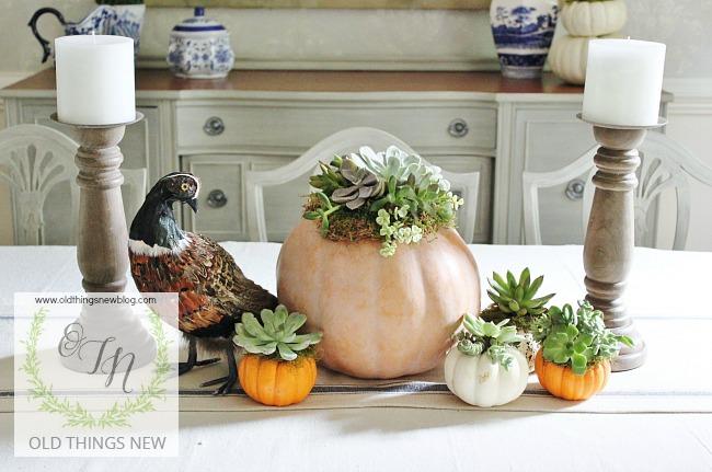 succulent-pumpkins-029